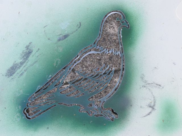 Robin MacLean pigeon cut out