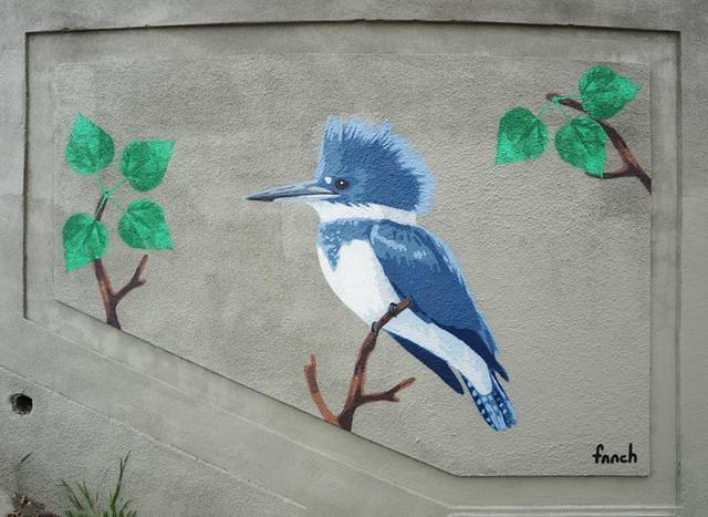 fnnch Jungle Stairs belted kingfisher