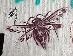 DE Berlin flying insect