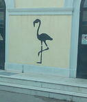 IT Udine Flamingo