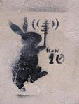 IT Venice rabbit io
