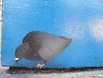 SF Mission 19th condo mural pigeons 04