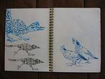 ScottWilliams_CaliforniaGlory_sketchbook13