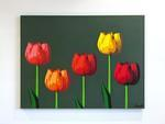fnnch Tulips
