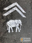 SF CAMP elephant sharrow