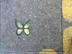SF Tenderloin butterfly