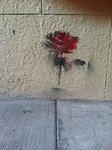 SF Hayes Valley red rose on a wall
